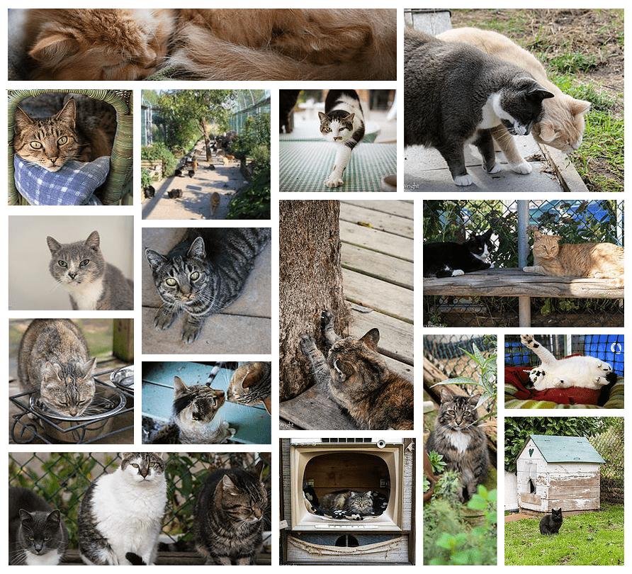 CatSanctuary-Collage