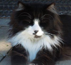tubby-neko-cat
