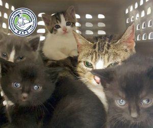 FelineFriday-Kittens-Blog3-031017