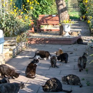 People Who Make Their Home A Cat Sanctuary