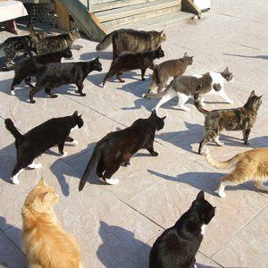 cat-sanctuary-richmond