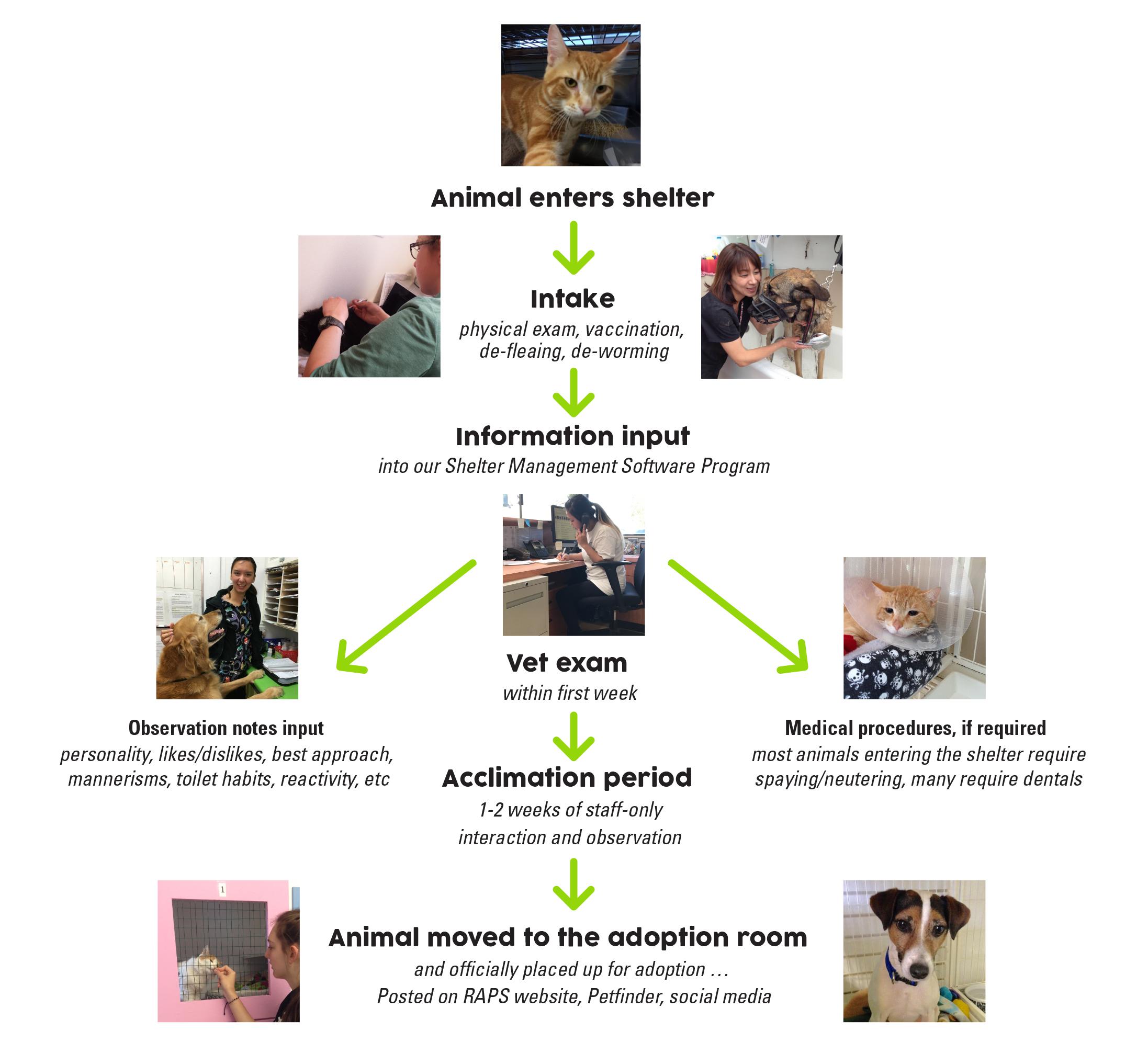 the raps adoption process regional animal protection society