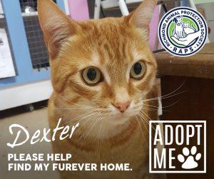 RAPS-Dexter-Adopt