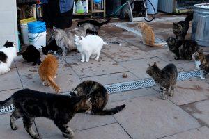 Cats-Sanctuary-1