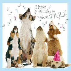 1608a39fcdff95702ebf1f7bd61bea8f--happy-birthday-pics-birthday-memes