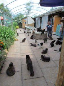 raps-cat-sanctuary