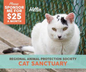 raps-cat-sanctuary-sponsorship