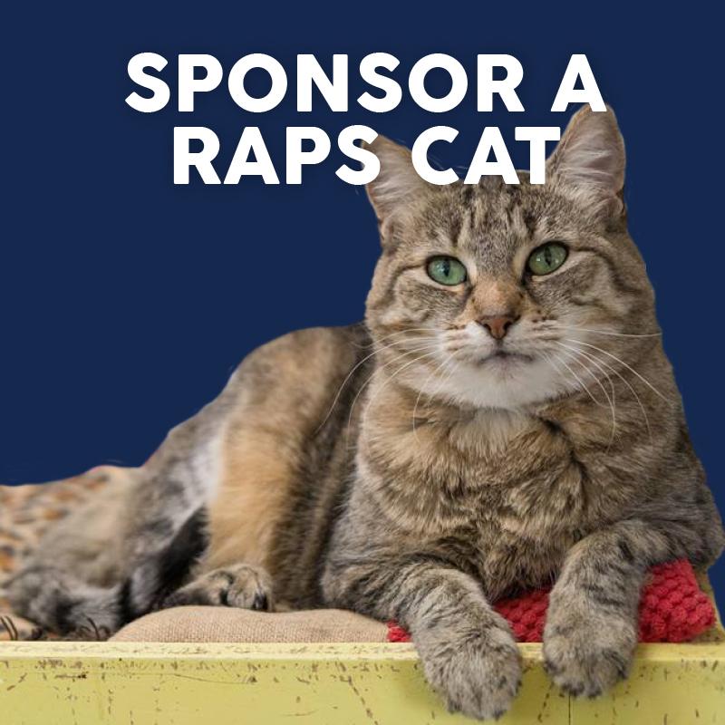 sponsor a raps cat