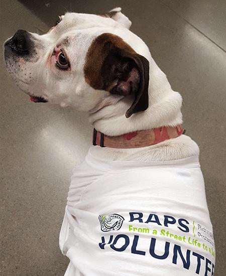 Careers | Regional Animal Protection Society