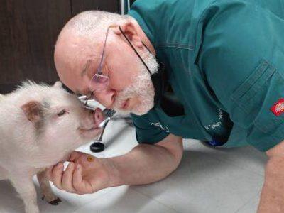 raps animal hospital sees exotics